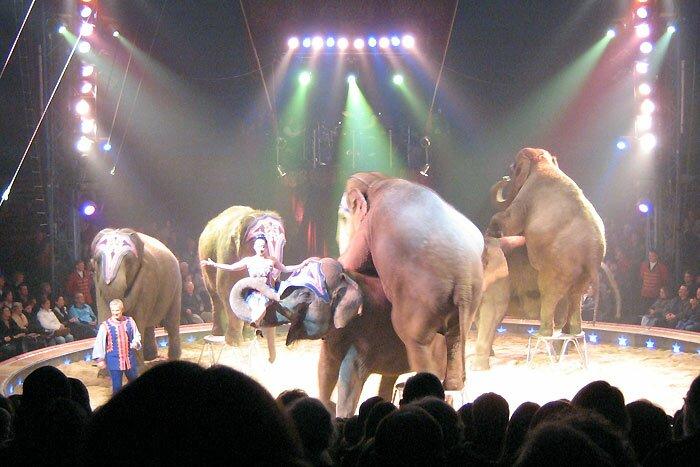 Шесть слонов